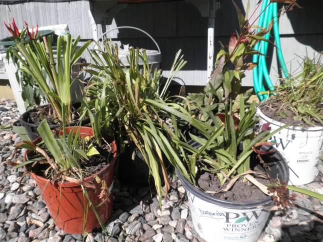 Sharing Plants