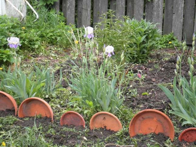 Free Flower Garden Border